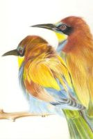 Drawing -  Bee Eaters by gopidi