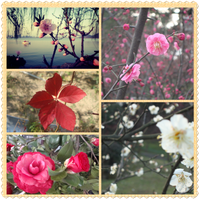 Flower collage by Laura-in-china