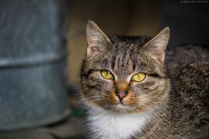 My grandparents cat by AlecsPS