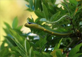 Green Tree Snake by Firey-Sunset