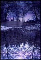 Purple Reflection by PorcelainPoet