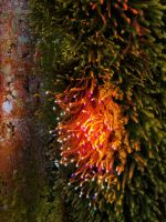Mossy tree 2 - Edit 3 by SusuSketches