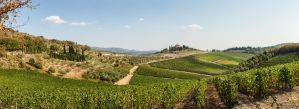 A Vineyard in Tuscany by NEOkeitaro