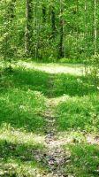 Green Path in Finland 2 by Anri82