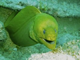 Moray Eel by Sona26