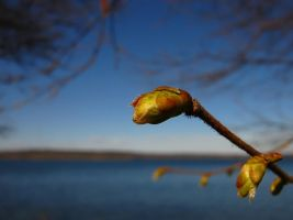 The Promise of Spring by Photopathica