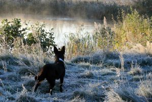 The dog and the mist by Dewfooter