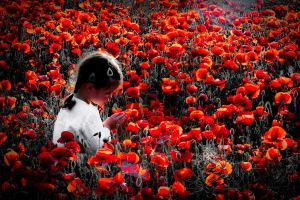 Little White and the Poppies by kereszteslp