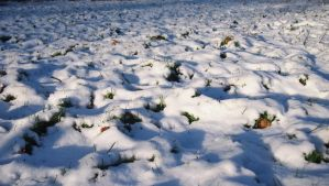 snow meadow with light and shadow by Nexu4