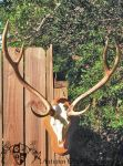 Axis European on Plaque 2 by AutumnCreekTaxidermy