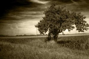 Old Tree by Murachacha