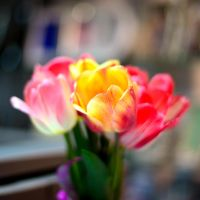 Tulips by Trotskiy