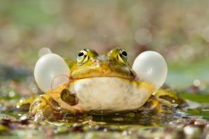 Its a Frogs Life by thrumyeye
