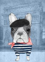 French Bulldog. by barruf