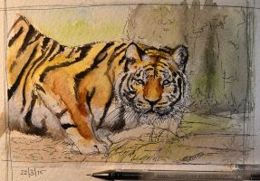Tiger by diabolic-sun