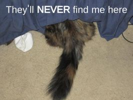 They'll Never Find Me Here by A1r2i3e4l5