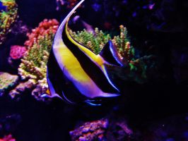 Reef Fish by NottheVoreFreak