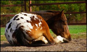 Cowboy Slumber by WildFeathers