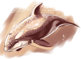 orca sketch by Knuffen