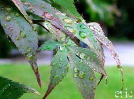 Droplets on a Leaf by xxEricsInfernoxx
