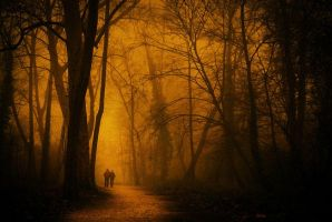 In search of Alice by ChristineAmat