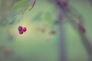 Lonely Crabapples by Mulsivaas