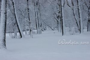 winter Forest 3 by Woolpix