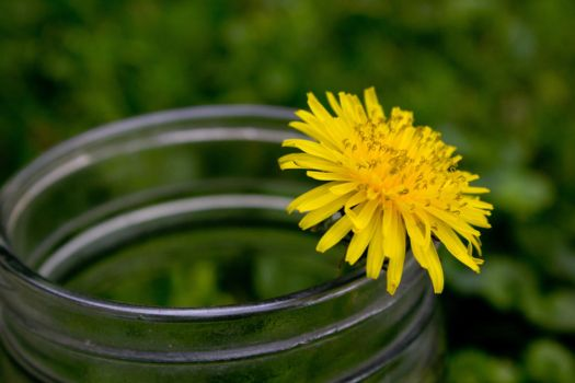 Dandelion in A Glass by DesMonday