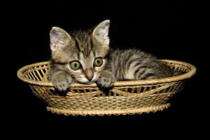 Kitty in the Basket by Blueeyes0001