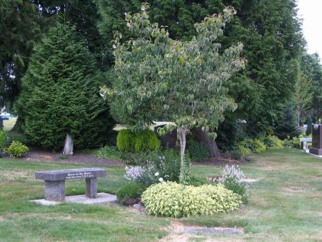 Cemetery bench and trees. by Regenstock