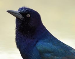 Grackle in the Shower by Fail-Avenger