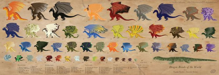 Dragon Reference Sheet by DrummerGirl375