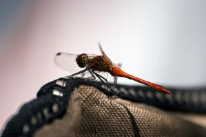 Insect 04 by Wess4u
