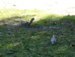 The Squirrel and the Dove  1 by princesslillymono