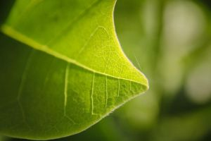 100. green by littleconfusion