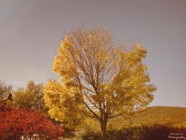 Fall Tree. by Sparkle-Photography