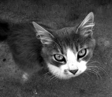 My Cat by Furious--Angel