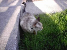My Kitty in the Grass by CollegeCADKid8908