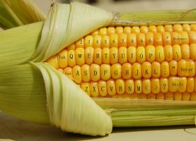 Microsoft Corn by Mahmoudbox