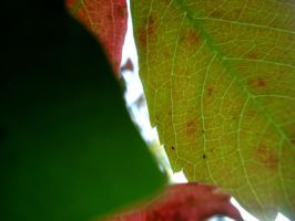 From Under a Leaf by Zilch17