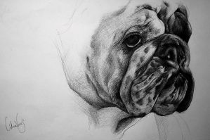 Bulldog by LidiaVives