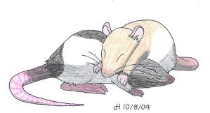Let Sleeping Rats Lie by VibrantEchoes