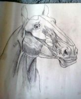 Horse head without skin by dARTh9220