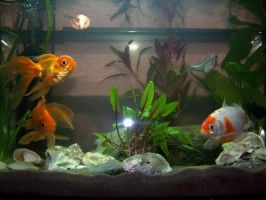 Fishes II by black-cat16-stock