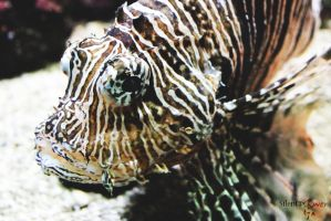 Pterois by CiindyCore