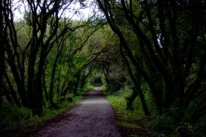 Neverending Path by DemonsWrathPhotos