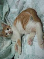 new kitten, Ginger by tamaow
