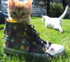 Caesar and my convers by Child-of-people