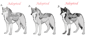 Realistic wolf Adoptables 006 by AimiTheSeawolf