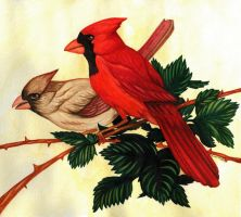Cardinals by rouko